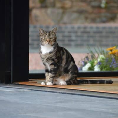Cat sat in doorway of screened doorway